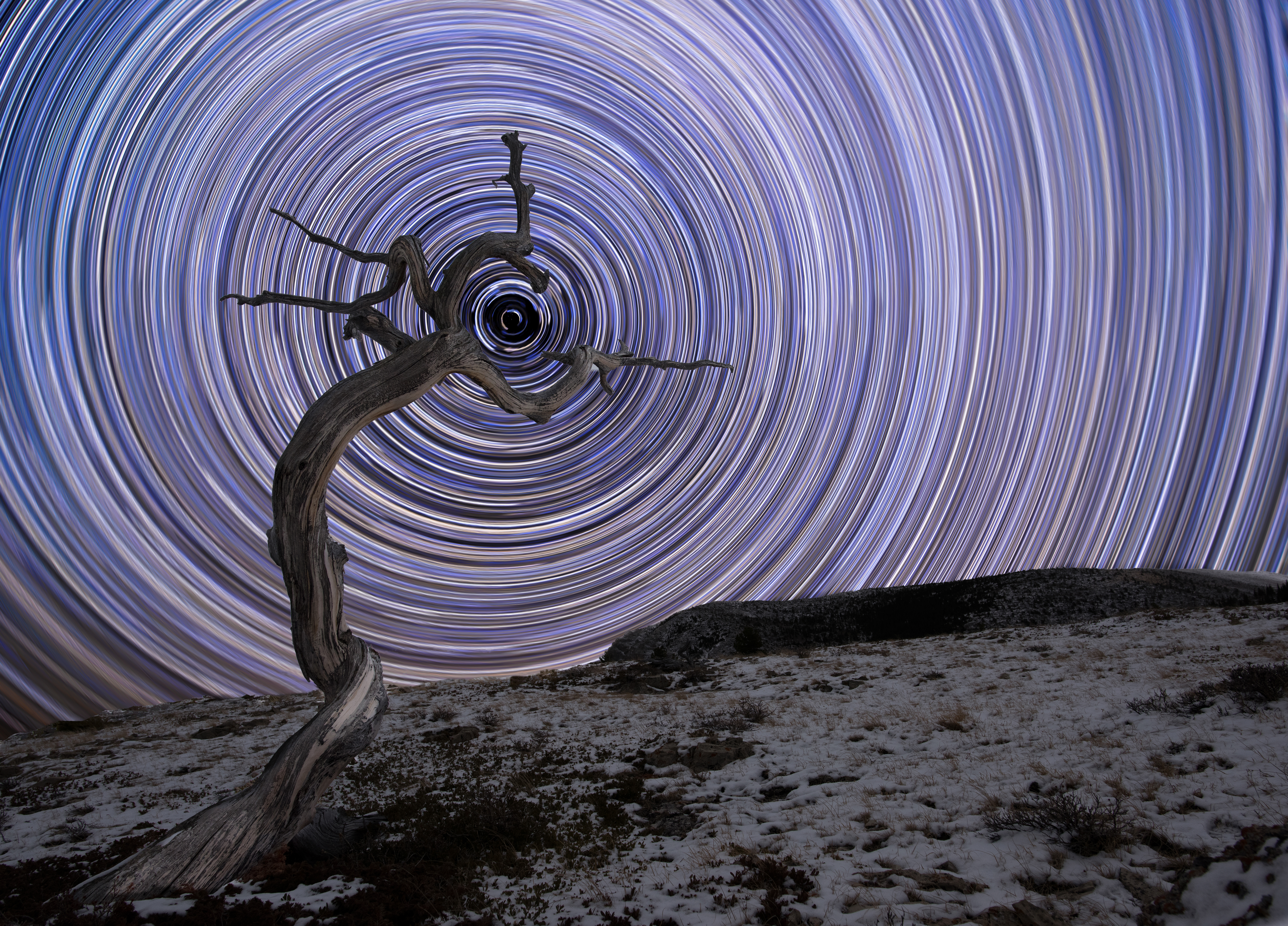 A weathered juniper tree grows in Montana's northern Rocky Mountains. The arced star trails in this long-exposure shot rotate around Polaris, the brightest star in the constellation of Ursa Minor.